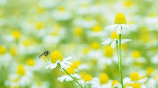 ヒトが花を撮るわけ Flower Portrait Gallery