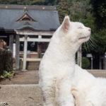 猫神社(出雲伊波比神社)へ行ってきました