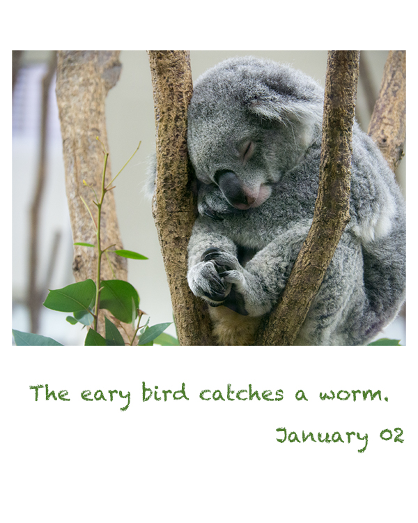 the early bird catches a worm.