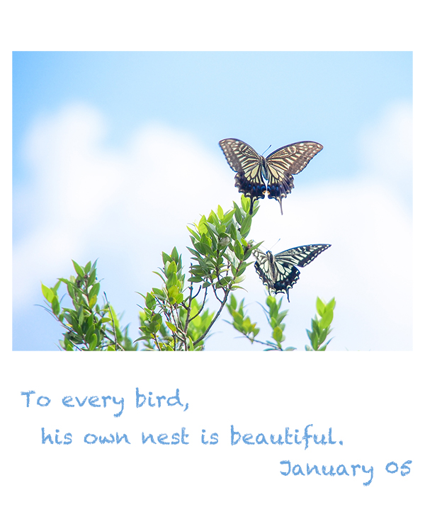 to every bird,his own nest is beautiful.