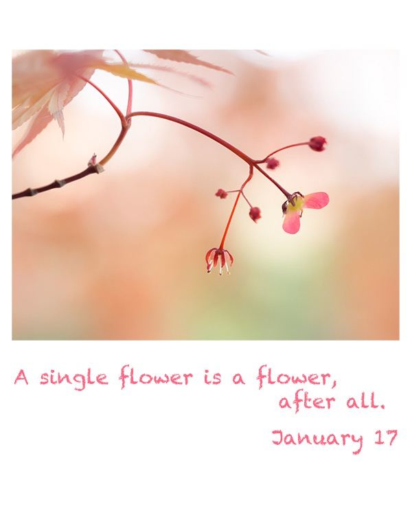 a single flower is flower,after all.