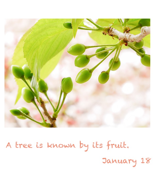 a tree is known by its fruit.