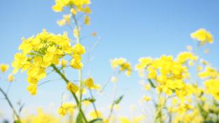 むらいさち先生のフォトツアーに参加して、八潮の花桃まつりへ春を探しに行きました