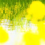 PEN-FのカラープロファイルとLightroomの段階フィルターで、美しいものをより美しく 桜編