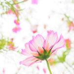 雨の昭和記念公園に咲く秋の花々を撮影しました