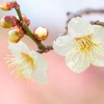 小石川後楽園で感じる春の気配