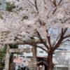 桜に誘われて神社にお参り