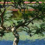 「FUJIFILM Imaging Plaza」オープンイベントで二の丸庭園へ