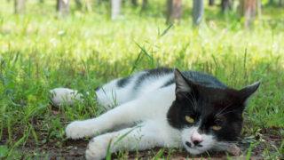 <読書>『猫は、うれしかったことしか覚えていない』石黒由紀子著 幻冬社