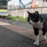 鶴見線さんぽ(4)鶴見線には猫が似合う