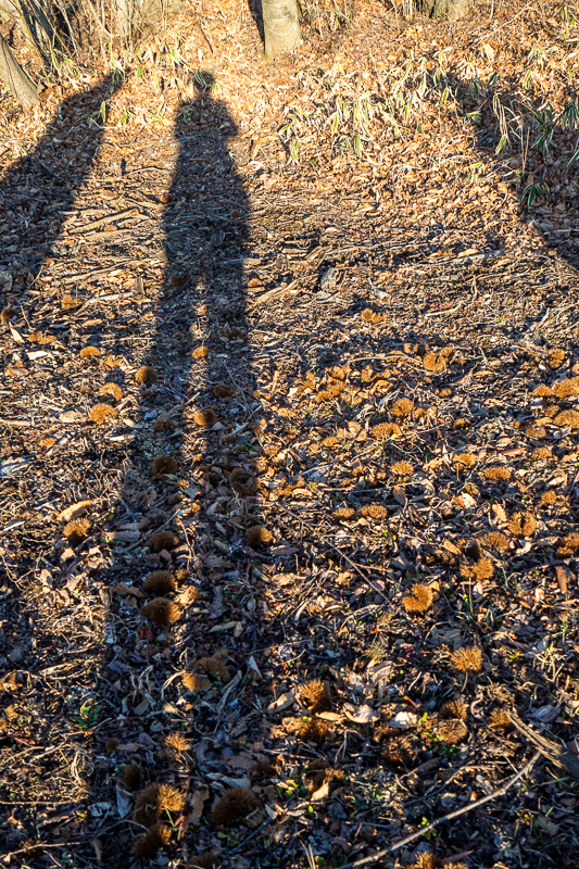 梅の木遺跡