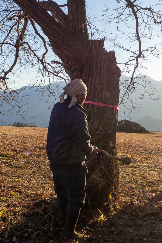 梅之木遺跡