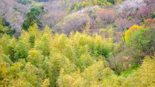 湘南モノレール沿線スナップ撮影講座で鎌倉山へ