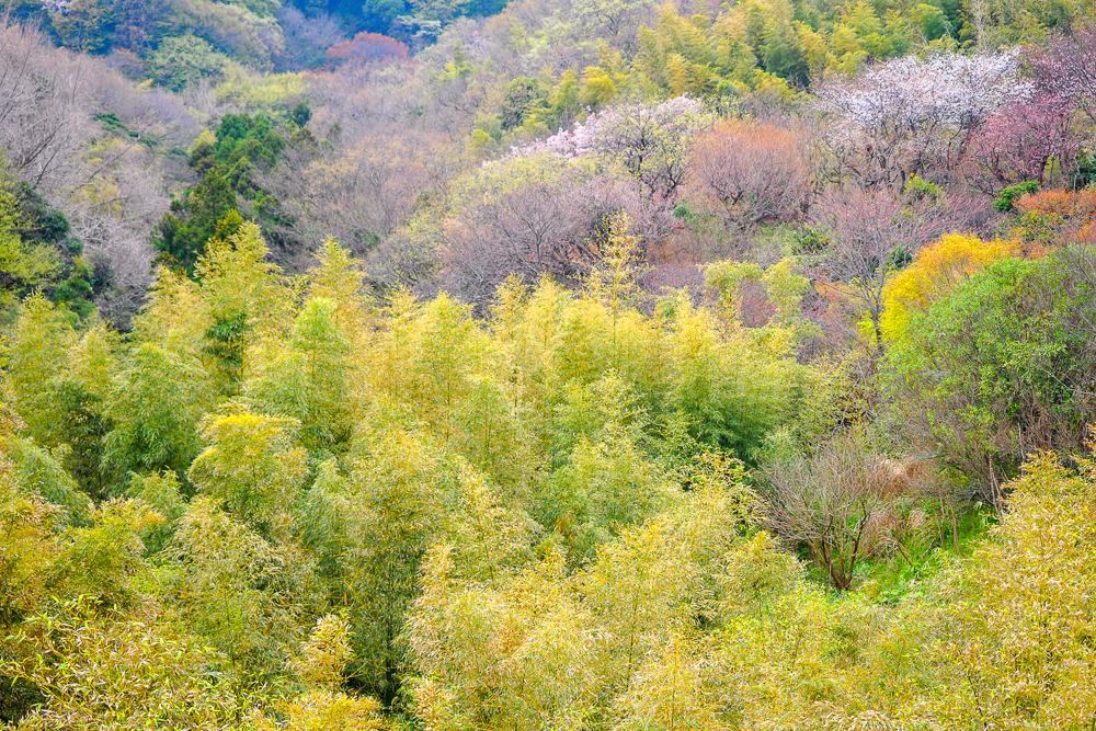 湘南モノレール撮影講座で鎌倉山へ