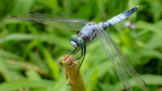 OLYMPUS TG-6で昆虫撮影