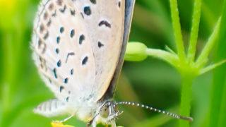 OLYMPUS TG-6で蝶