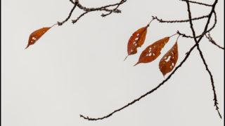 萩原史郎さんの「小さな風景撮影術」で、何気ない場面を絶景に変える方法を学ぶ