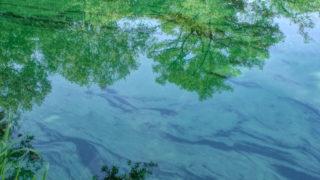 池の中のアート