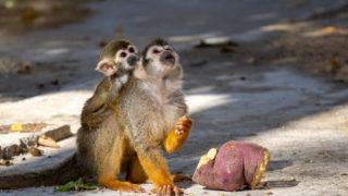 リスザルとカピバラに会いに行く@東武動物公園