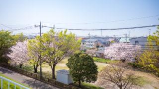 桜を楽しんだ近所の公園