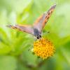 GRで蝶と遊ぶ