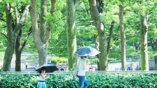 PEN-Fで夏を撮る カラープロファイル編