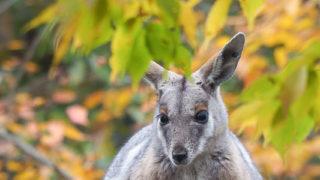 ブログ映えの秋色動物園(埼玉県こども動物自然公園)
