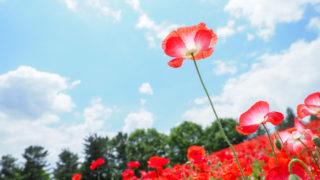 風景写真出版主催、昭和記念公園撮影会に当選