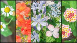 オリンパスカメラ搭載 フォトストーリーで庭の花を撮る