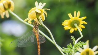 雨とトンボと庭の花