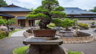 初めての盆栽美術館